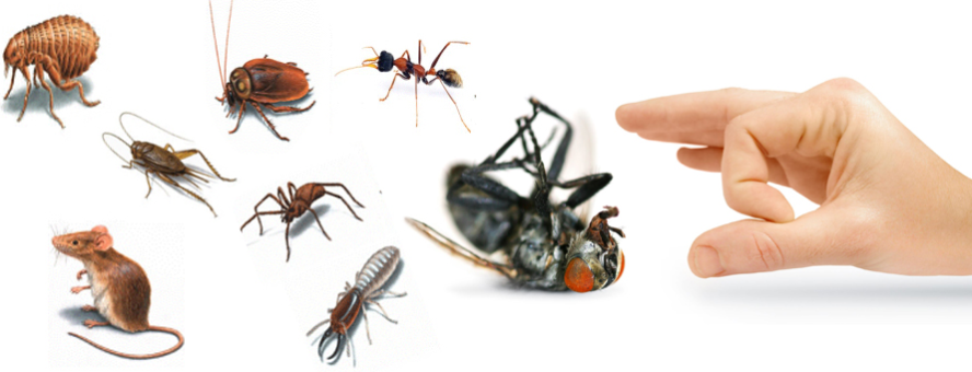 Pest Control Services in Dhaka