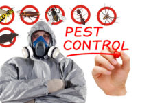 Pest Control Services in Chittagong