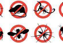 Best Pest Control company in Dhanmondi