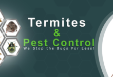Best Termite Control Company in Dhaka