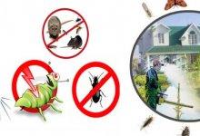 Pest Extermination Service Dhaka