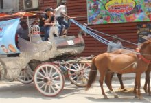 Ghorar Gari or Horse Carriage Rental Company in Dhaka,Bangladesh