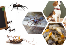 Gulshan Pest Control Service – 100% Guaranteed and Eco-Friendly Solution!