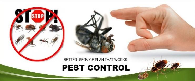 Uttara Pest Control – Eco-friendly Pest Control Service