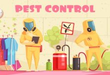 Safe and Guaranteed Pest Treatment in Dhaka